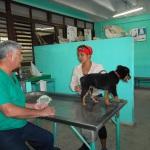 Clínica Veterinaria de la Universidad de Camagüey
