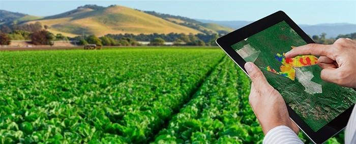 La Inteligencia Artificial en la Agricultura de Presición, una de las temáticas a desarrollar por este proyecto.
